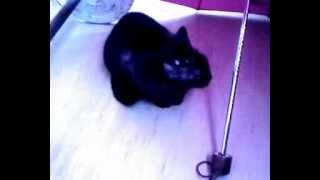 кошка облизывается
