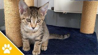 MiezWohnung gesucht - Spezial: Das große Katzen-ABC