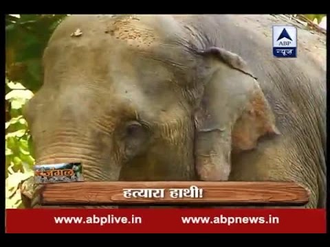 Jungle: Watch story of 'Bhola' whose second name was 'death'