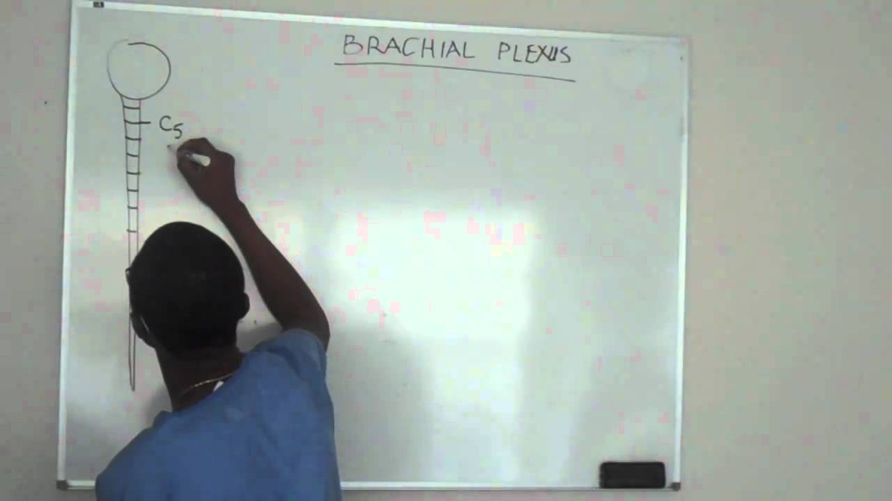 Brachial plexus made ridiculously simple PART 1-Lecture - YouTube