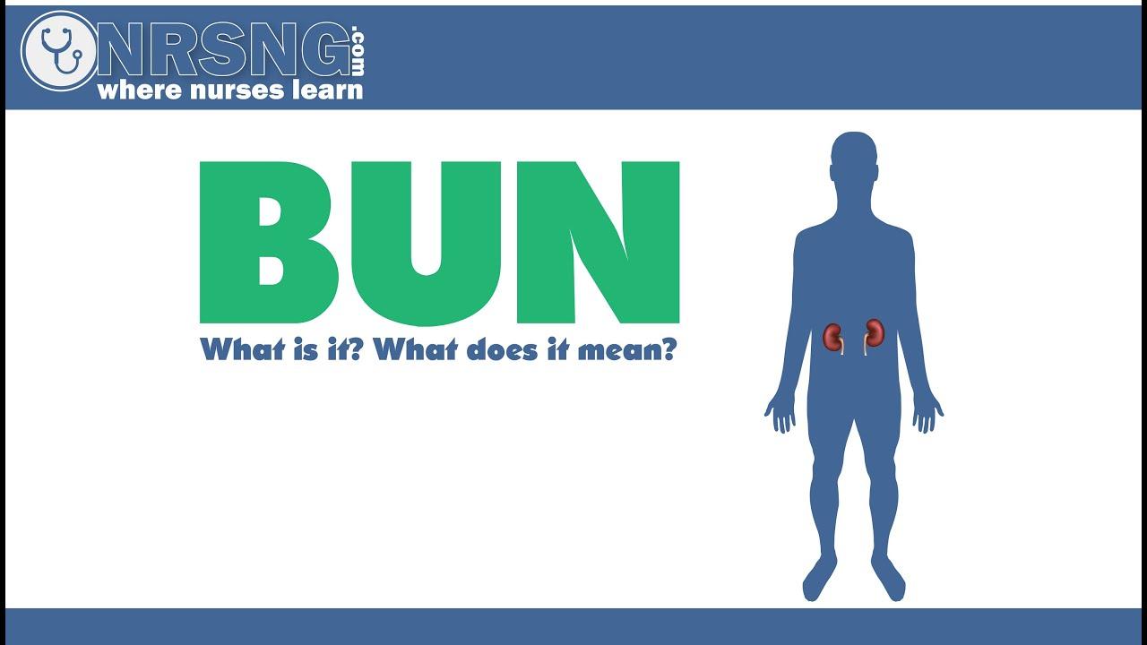 Bun blood urea nitrogen what is it what does it mean youtube