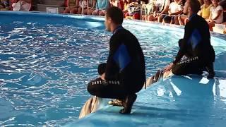 Шоу дельфинов, Сочи парк 2017