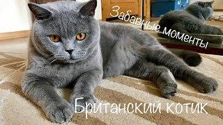 СМЕШНЫЕ МОМЕНТЫ британского кота Гарри 2019/ British cat