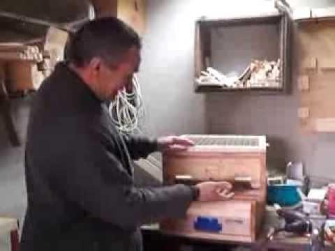 Маточное молочко пчелиное: лечебные и полезные свойства
