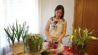 видео Уход за тюльпанами после цветения. Сайт sadovymir.ru