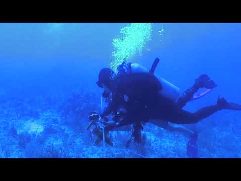 Underwater Survey Transect
