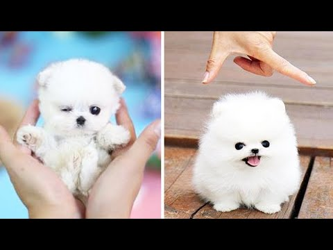Cute Puppies Doing Funny Things 2020   11 Cute Animals