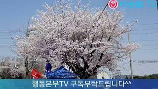 그래도 햇살은 따뜻 !박근혜대통령 즉각복권!(19.04.15) ! 오늘만이 내 세상