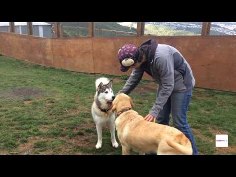 Animal Care Attendant - A Day In The Life