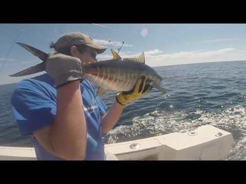 Tuna Fishing At The Coimbra Wreck Off Of Long Island, NY