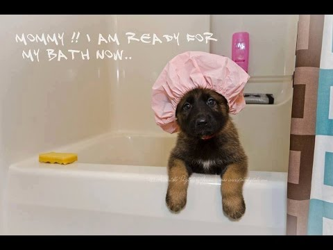 Cutest And Funny German Shepherd Dogs Pic Caps Youtube