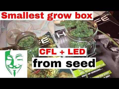 Micro grow Autoflower CFL and LED grow box SETUP HOW TO GUIDE TIPS