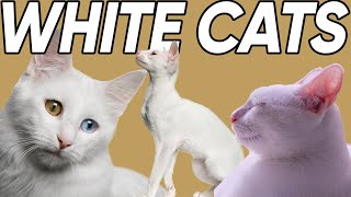 Five Phenomenal Facts About White Cats!