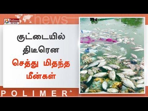 குட்டையில் திடீரென செத்து மிதந்த மீன்கள் | #FishDead | #Tirupur | #Nallathupalayam