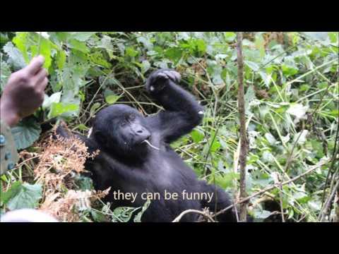 Gorilla Trekking Uganda Travel