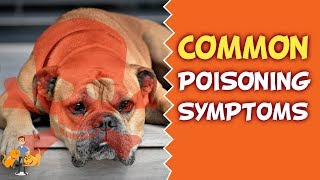 Has My Dog Been Poisoned? (top poisoning symptoms in dogs)