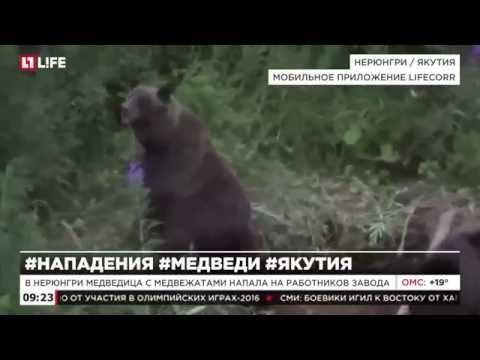 В Нюрюнги медведица