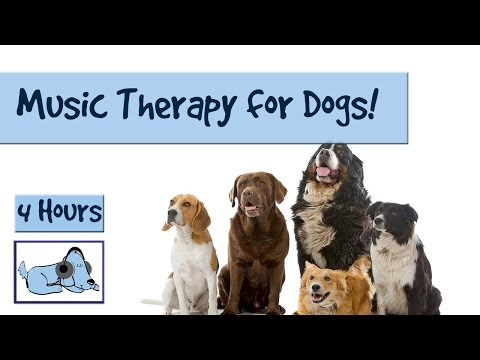 4 Hours of Dog Acoustics. Music Therapy for Your Dogs & Puppies – Help Calm your Dog with Music
