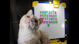 АЛФАВИТ УЧИМ БУКВЫ С КОТОМ Буквы для малышей Развивающее видео Смешные животные