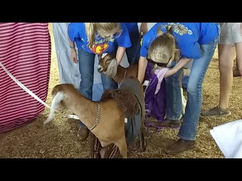 Special Show by 4-H Goat Club: Goat Glamour - Fashion Through The Ages