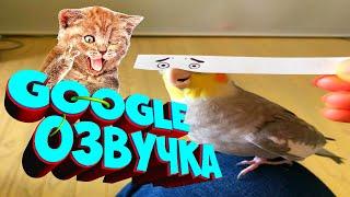 СМЕШНАЯ Google ОЗВУЧКА  ГУГЛ ОЗВУЧКА  СМЕШНАЯ ОЗВУЧКА ЖИВОТНЫХ РОБОТОВ  ПРИКОЛЫ  РЖАЧ 13