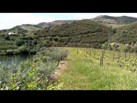 O Alto Douro e a Orquestra de Medrões - 2ª parte
