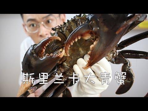 【斯里蘭卡大青蟹】1000塊錢買了只臉盆大的螃蟹,沒想到竟成了最大翻車現場! 【奇異小北】