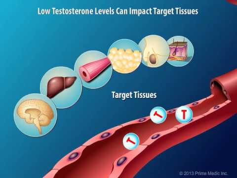 Production and Action of Testosterone