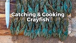 Crayfish: Catch 'em and Cook 'em!