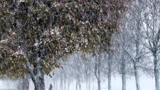 Хороводит снег с дождем