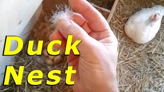Unboxing Video Where There's Smoke There's Fire #13 Hatching Duck & Goose Eggs