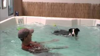 Bandit Swimming at the Indoor Pool - Summer FUN!