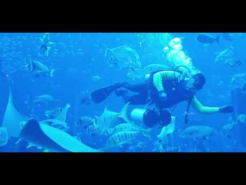 The Lost Chambers Aquarium – Atlantis, Dubai