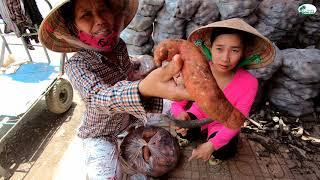 Tới tận chợ Cái Bè mua khoai về bán - Hương vị đồng quê - Bến Tre - Miền Tây