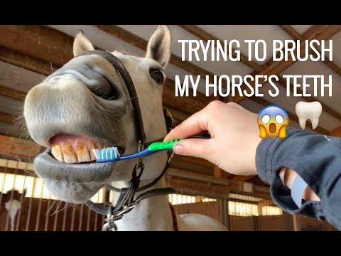 BRUSHING MY HORSE'S TEETH?!