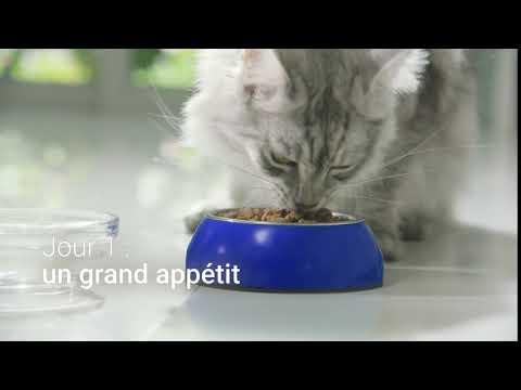 PURINA ONE® - Le Programme 21 Jours – Jour 1 : Un Grand Appétit – 12s
