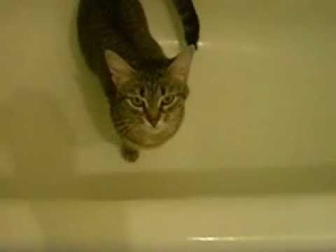 Кошка хочет кота