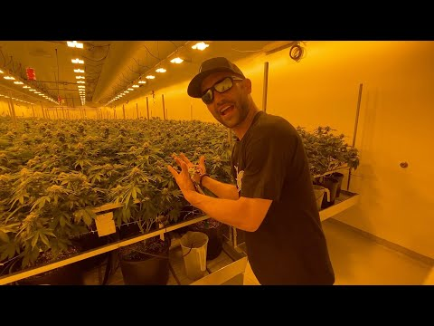 Tour Western Missouri's C4 cannabis grow site