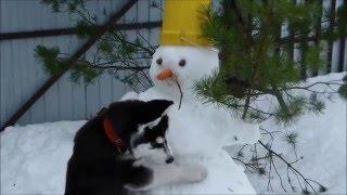 Уроки лепки снеговика от Макса