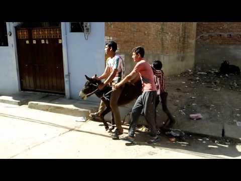 Hamirpur U.P,, Holi ke din