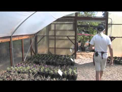 Three Palms Nursery Video