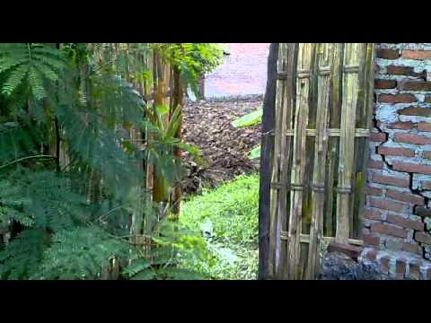 Pasang pagar dari bamb...