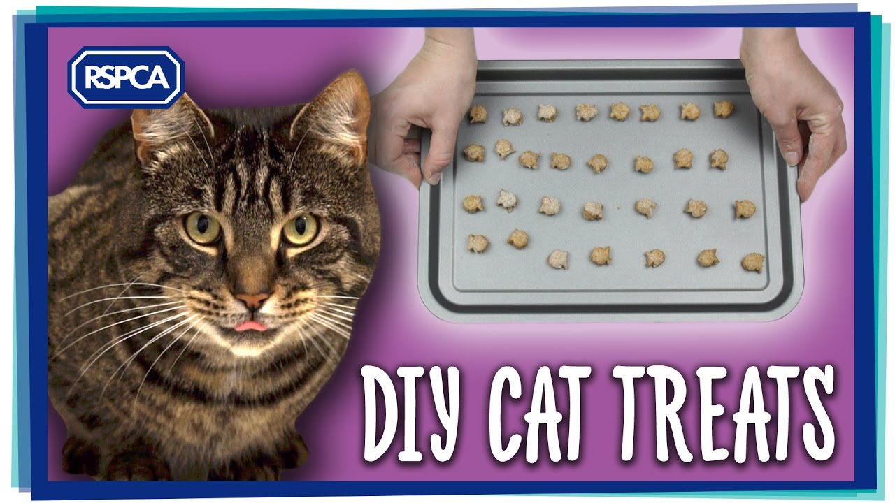 How To Make Cat Treats You
