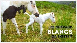 DÉCOUVERTE 🌼 I Un cheval BLANC ?! ⛄👻🕊