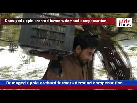 Damaged apple orchard farmers demand compensation