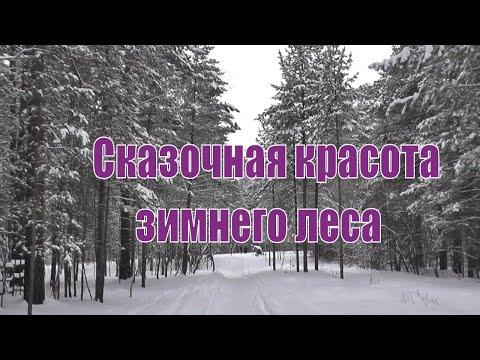 Завораживающая красота зимнего леса.Заельцовский парк. Новосибирск.