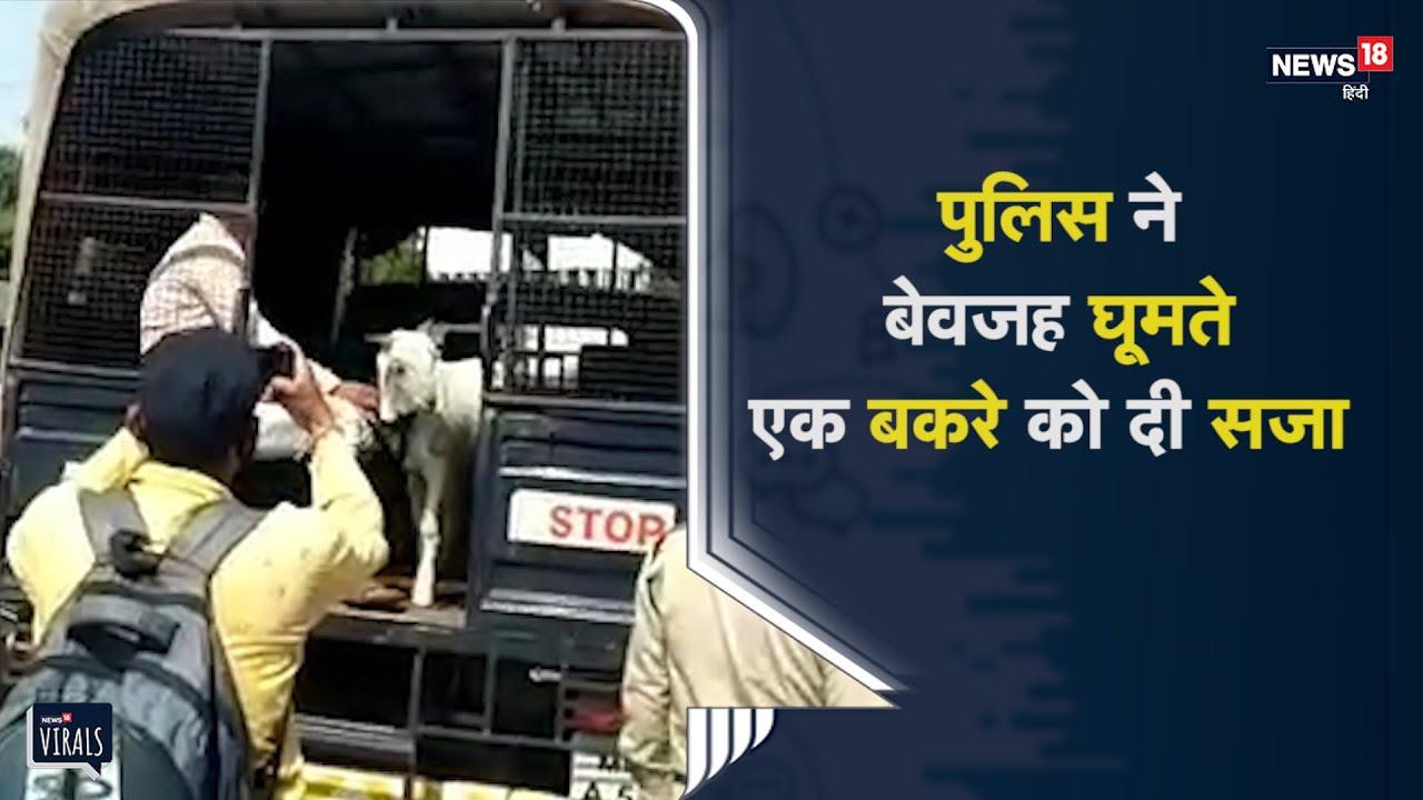 पुलिस ने बेवजह घूमते एक बकरे को दी सजा