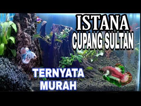 aquascape-cupang-sultan-betta-fish-murah-review-harga-dan-model