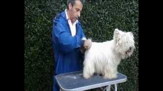 Trimming (arreglo,peluquería) Parte 1 Del West Highland White Terrier (westie,westy) De Pizpiretas
