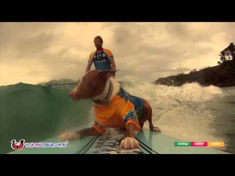 Surfing Dog Spectacular 2014 Noosa Australia